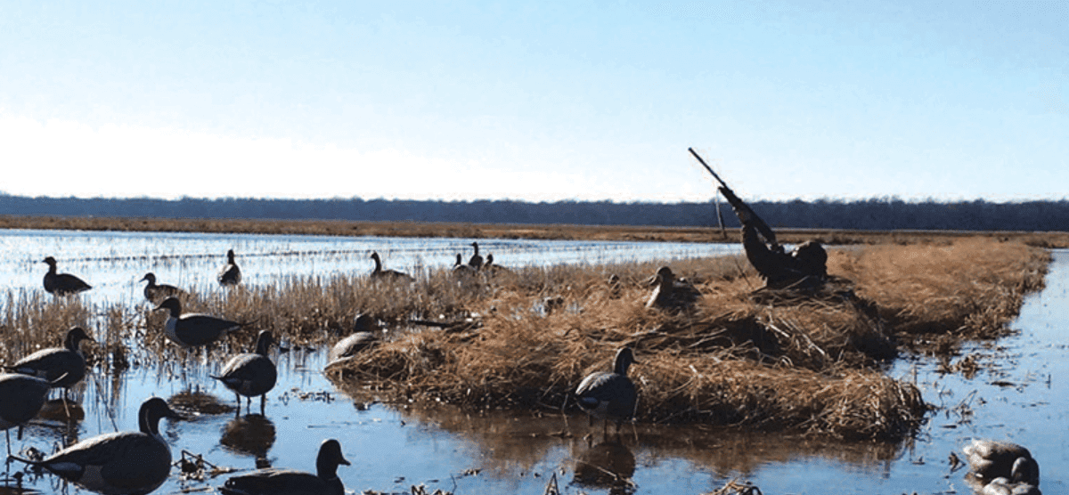 duck hunting accessory